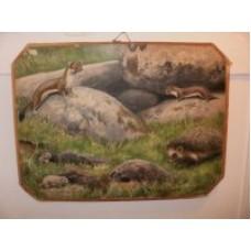 Skoleplanche hermelin og pindsvin