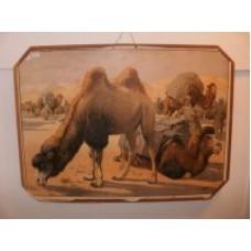 Skoleplanche kameler